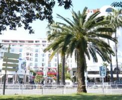 Cannes24850.jpg