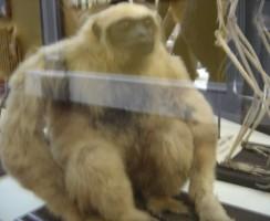 Natural_History_Museum10_.jpg
