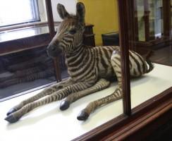 Natural_History_Museum1_.jpg