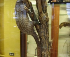 Natural_History_Museum3_.jpg