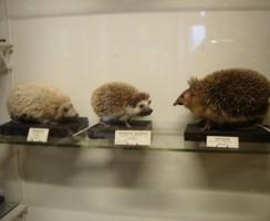 Natural_History_Museum4_.jpg