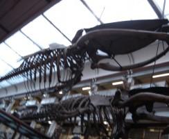 Natural_History_Museum5_.jpg