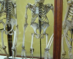 Natural_History_Museum9_.jpg
